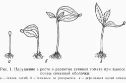 Схема нарушения в росте и развитии сеянцев