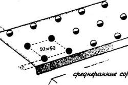 Схема посадки цветной капусты в грунт