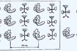 Схема смешанной посадки овощей.