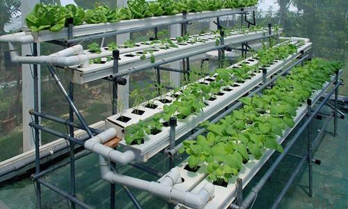 Гидропоника - выращивание растений без почвы