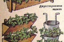 Вертикальный способ выращивания клубники чертежи 159