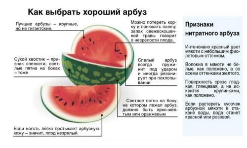 Советы по выбору арбуза