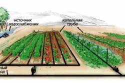 Принцип капельного полива сада