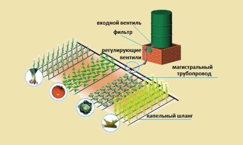 Пример системы капельного полива