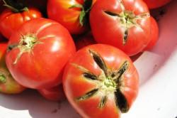 Потрескавшиеся помидоры