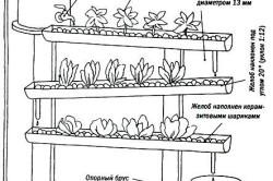 Принцип работы гидропонной системы выращивания зелени