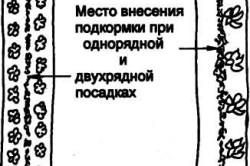 Схема прикормки при однорядной и двухрядной посадке
