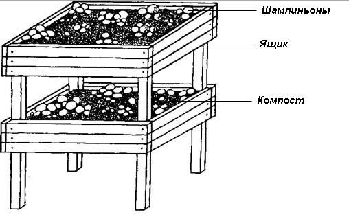 Схема выращивания шампиньонов