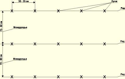 Схема посадки дыни