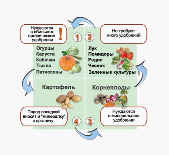 Схема соседства овощей по типу