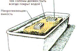 Схема выращивания вешенки на субстратах.