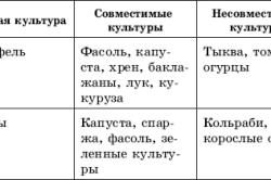 Таблица соседства овощей