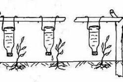Вариант капельного полива с применением пластиковых бутылок