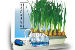 Гидропонная установка для выращивания лука.
