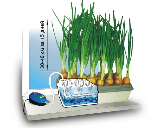 для выращивания лука