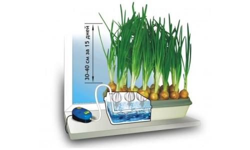 Гидропонная установка для выращивания лука