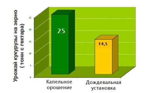 Сравнение методов полива кукурузы
