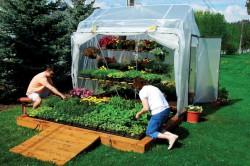Уход за тепличными растениями