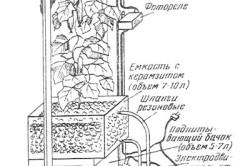 Схема автоматизированного устройства для выращивания огурцов на подоконнике