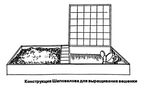 Грибы вешенки в домашних условиях