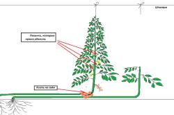 Схема метода выращивания припусканием