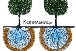 Схема области смачивания участка земли при капельном поливе.
