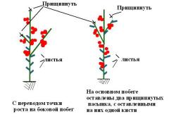 Схема проведения прищипки растений томатов