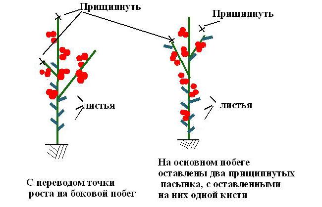 Схема проведения прищипки