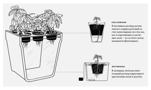 Схема выращивания перца на гидропонике