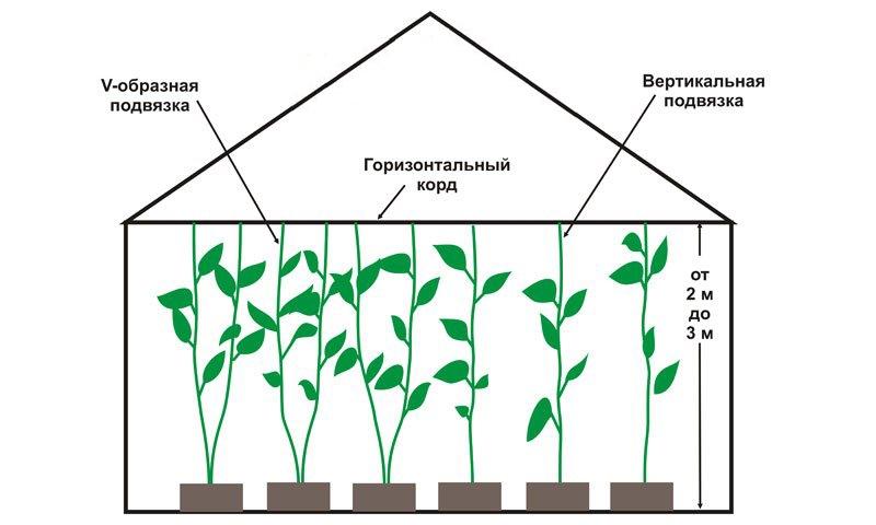 Сроки посадки и состав почвы