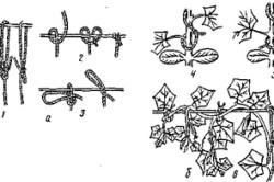 Схема подвязка растений к шпалере