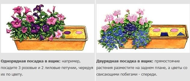 Схема посадки цветов в ящик
