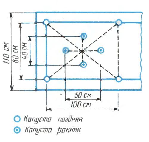 Схема посадки пекинской
