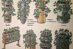 Схема посадки клубники вертикальным способом
