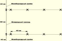 Схема посадки огурцов в шахматном порядке.