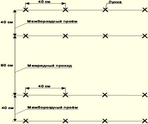Схема посадки огурцов в