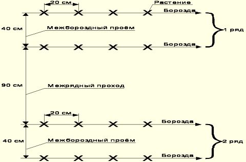 Схема посева огуречных семян.