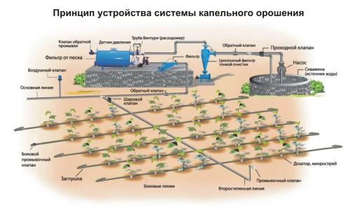 Схема принципа устройства системы капельного полива и орошения