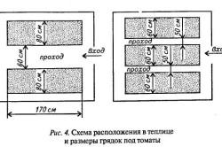 Схема расположения в теплице и размеры грядок под томаты