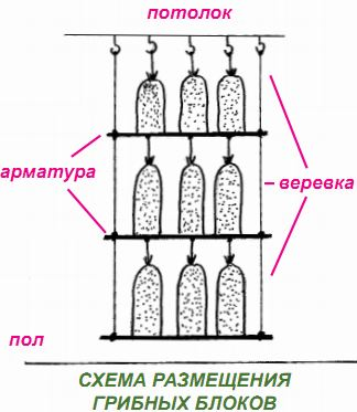 Выращивание вешенок. Схема