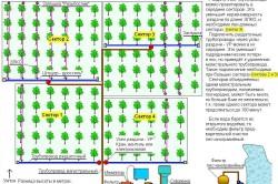 Схема размещения системы капельного орошения на участке