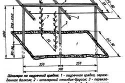 Схема устройства шпалеры на огуречной грядке.