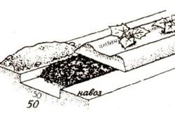 Схема удобрения грядки для выращивания огурцов.
