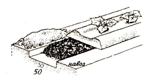 Схема удобрения грядки для