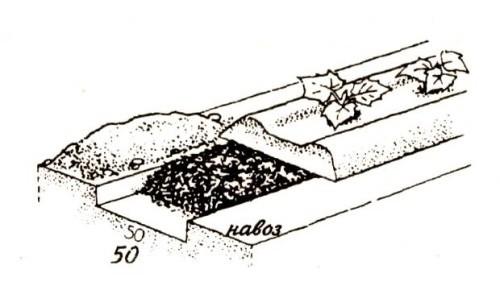 Схема удобрения огуречной грядки