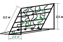 Схема выращивания огурцов на лестнице.
