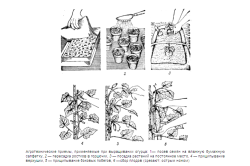 Этапы посадки и выращивания огурцов