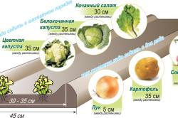 Схема выращивания овощей в ящиках-грядах
