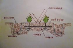 Схема земельно-пленочного мульчирования