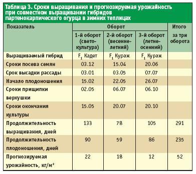 сроков выращивания огурцов